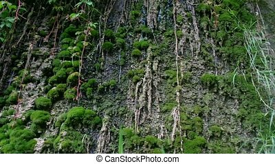 rainforest - wet mossy rocks in the rain forest