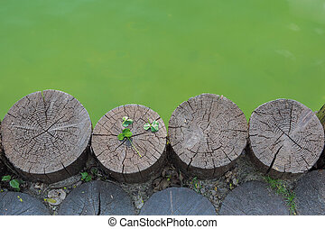 Three leaf clover on a wooden log next to waterbody - Next...