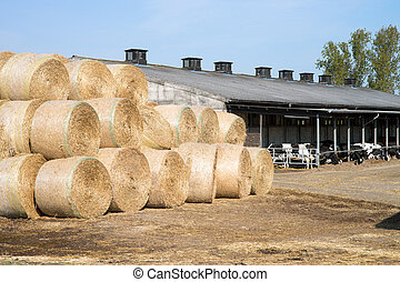 Straw Bales - many straw bales on a farm