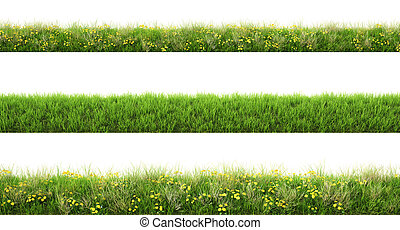 grass - Green grass with flowers isolated on white...