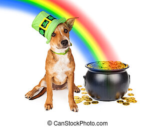 Dog With Pot of Gold and Rainbow - Cute crossbreed puppy...