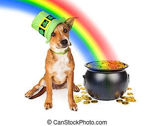 cão, com, pote, de, Ouro, e, arco íris,