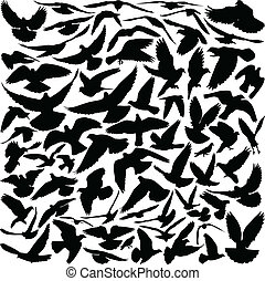 Pigeon silhouettes - Silhouettes of pigeons in many...