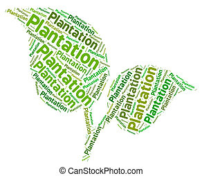 Plantation Word Indicates Agricultural Estate And Ranches -...