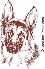 shepherd vector dog sketch