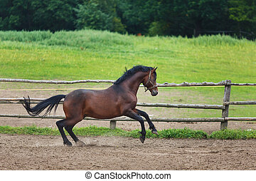 Running horse in the stable at the summer time