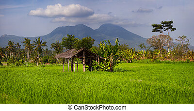 Shaded Rest House in an Asian Rice Field