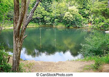 Two rope swings over a beautiful pond. - Two rope swings...