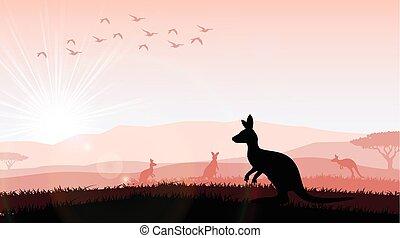 Silhouette a kangaroo the feeding