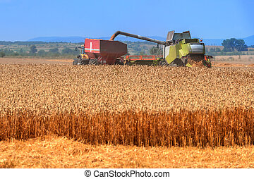 Harvester - Amazing rural scene on autumn field with...