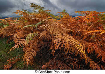 leaves - Majestic fern leaves with a cloudy sky on a...