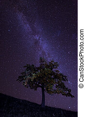 MilkyWay - The Milky Way over the alone tree silhouette...