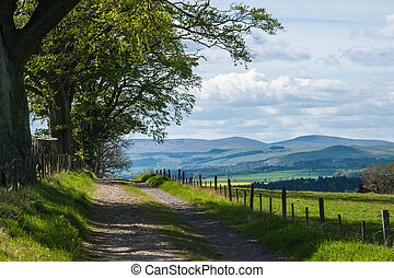 Tree Lined Country Lane and Cheviot Hills , Northumberland ,...