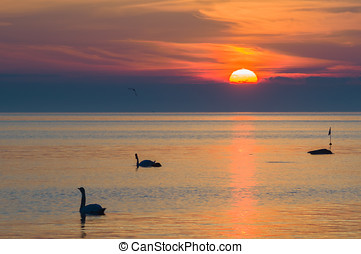 Two swans silhouettes in the beautiful sunset over the sea -...