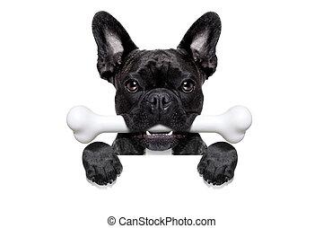 狗, 骨頭