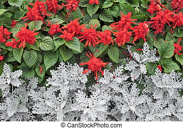 Red Flowers and Green Leaves