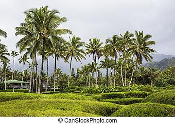 Kauai island on Hawaii
