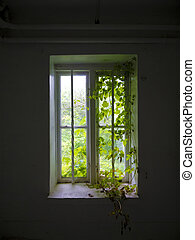 old overgrown window - old overgrown wooden window with...