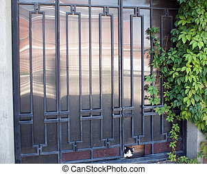 Locked gates with ornaments of metal strips, green ivy...