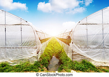 Plastic greenhouses - Organic vegetables in greenhouses