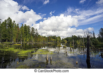 Northern landscape with boggy lake. - Beautiful landscape on...