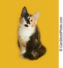 Tricolor kitten sitting on yellow background