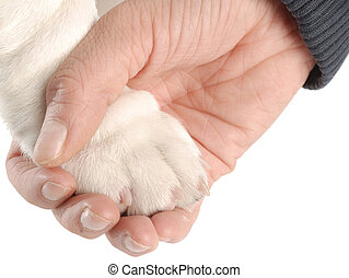 person\'s hand holding on to dog paw on white background