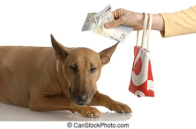 expensive dog - handing over money to bull terrier