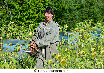 Bee Keeper Working with Bee Hives in a sunflower field - Bee...