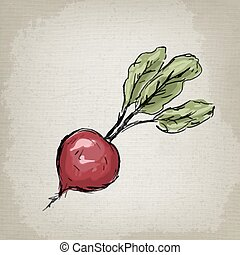 Beet vector illustration