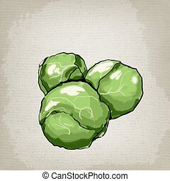 Brussels sprouts Vector illustration