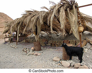 Bedouin tent - Bedouin tent, Egypt...