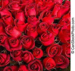Plenty red natural roses background.