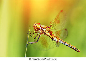 Closeup of a dragonfly seated on a leaves - Closeup of...