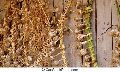 Garlic tied up and ready for drying