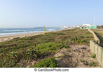 Dune Rehabiliation on Durban Beach, South Africa - Coastal...