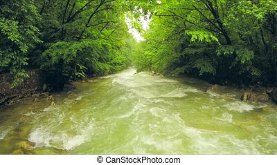 Calm River Flowing Down Among Lush Greenery In Forest