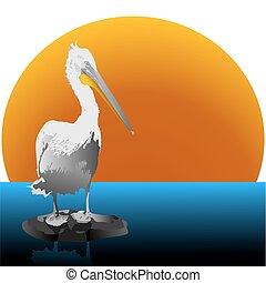 Pelican standing at water. Vector.