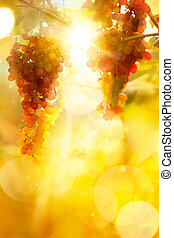 Art grape background Vineyard harvest season