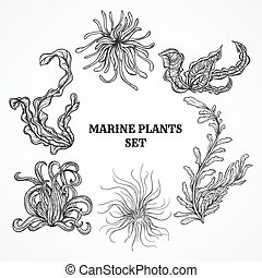 marine plants, leaves and seaweed - Collection of marine...
