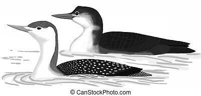 Red-throated & Common Loon