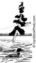 Common Loon - Gavia immer - lake & tree