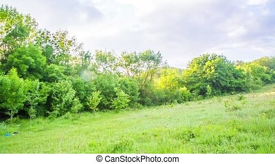 Wastes Scattered On Green Grass In Forest - PAN SHOT of a...