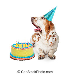 Basset Hound Dog Blowing Out Birthday Candles - Funny photo...