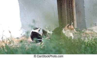 Feral cat family resting in grass. Lovely kittens play with...