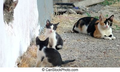 Family of feral cat. Cute kittens play about mama-cat
