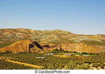landscape of the olive trees in europe