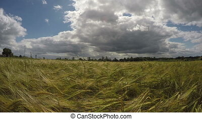 Barley field on sunny cloudy day 4K - Landscape with...