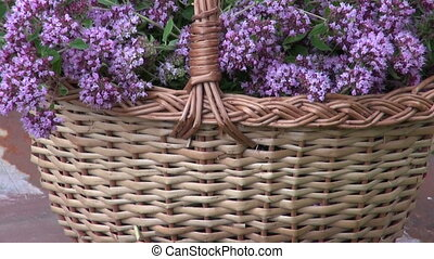 Origanum in wicket basket - Zoom out of origanum in wicket...