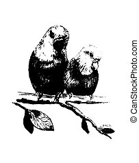 Illustration of two birds, parrots